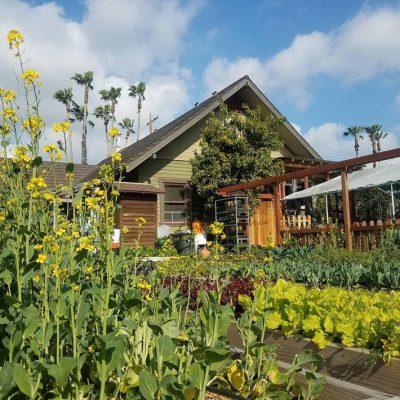 Thiết kế nhà vườn dưới 900 triệu tại Phú Thọ